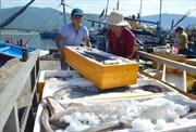 Ngư dân miền Trung tấp nập vươn khơi, bám biển