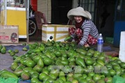 Đắk Lắk chuyển diện tích cà phê ngoài quy hoạch sang trồng loại cây khác