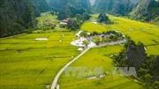 Chiêm ngưỡng mùa vàng đẹp như tranh ở Tam Cốc