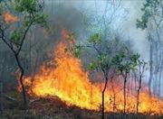 Dập tắt đám cháy rừng ở Bãi Cháy, Quảng Ninh