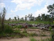 Lâm Đồng: Tìm giải pháp ổn định đời sống người dân di cư