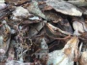 Bắt giữ 3 tấn thực phẩm bẩn 'ngụy trang' là hàng hải sản sạch trong xe đông lạnh