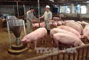 Giá lợn ở Đồng Nai tăng rồi lại giảm