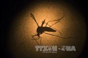 122 bệnh nhân Malayysia tử vong do sốt xuất huyết