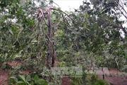 Các địa phương khẩn trương khắc phục hậu quả bão số 4