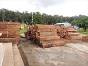 Thu giữ 2 xe container chở khối lượng lớn gỗ giáng hương