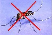Làm gì khi trong nhà có người bị sốt xuất huyết?