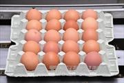 Italy thu hàng chục nghìn quả trứng nhiễm thuốc trừ sâu