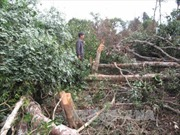 Đắk Nông: Gần 2 ha rừng nguyên sinh bị phá trắng trong một đêm