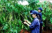 Agribank và tỉnh Lâm Đồng sơ kết một năm thực hiện thỏa thuận hợp tác giai đoạn 2016 - 2020