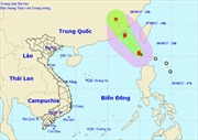 Các tỉnh, thành phố ven biển từ Quảng Ninh đến Phú Yên chủ động ứng phó với bão Guchol