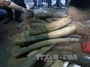 Phát hiện xe tải chở 1,5 tấn hàng nghi là ngà voi