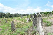 Cần kiên quyết thu hồi rừng phòng hộ đầu nguồn bị lấn chiếm trái phép tại Đắk Lắk