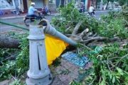 Năm nay sẽ có 6- 7 cơn bão, áp thấp nhiệt đới