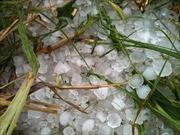 Mưa đá gây thiệt hại tại Lào Cai