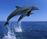 Vũ điệu cá heo