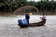Mổ xẻ yếu kém của nuôi cá tra