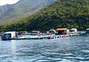 Hướng làm giàu từ nuôi cá lồng trên hồ thủy điện