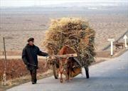 Triều Tiên trước nguy cơ thiếu lương thực nghiêm trọng