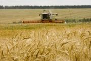 """Nga lên kế hoạch xây dựng """"hành lang ngũ cốc"""" Viễn Đông"""