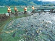 Quảng Nam nuôi cá tầm xứ lạnh
