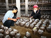 Phát triển và đa dạng hóa sản xuất nấm