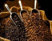 Cà phê arabica ở mức cao nhất 4 tuần qua