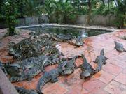 Cho cá sấu ăn, một phụ nữ bị cắn đứt lìa tay