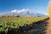 Chile tăng xuất khẩu trái cây sang Việt Nam