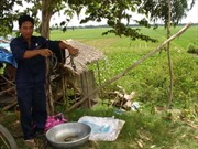 Đồng bằng sông Cửu Long: mưu sinh trong mùa lũ