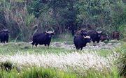 Điều tra vụ xẻ thịt bò tót tại Vườn quốc gia Cát Tiên