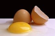 Phát hiện sán lá trong trứng gà
