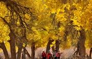 Ngắm cảnh mùa thu tuyệt sắc ở Trung Quốc