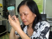 Hà Nội đối phó với kiến ba khoang