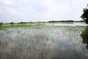 Những cánh đồng chết vì ô nhiễm