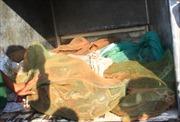 Phát hiện nhiều bao trăn chở trên xe tải