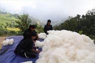 Người La Chí bản Phùng giữ nghề trồng bông dệt vải