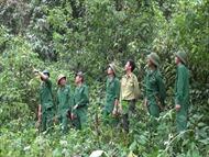 Quản lý, bảo vệ rừng hiệu quả