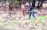 """Đấm """"vêu mồm"""" kangaroo vì dám bắt nạt chó nhà"""
