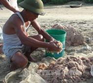 Ngư dân Quảng Bình trúng mùa ruốc biển