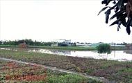 Chuyển mục đích sử dụng từ đất nông nghiệp sang đất ở cần điều kiện gì?