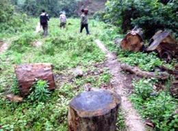 Thu thập xong chứng cứ vụ tấn công cán bộ bảo vệ rừng