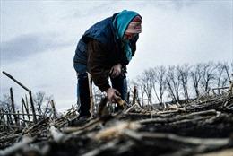 Những quả mìn Donetsk