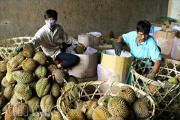 Cây ăn quả mang lại hiệu quả kinh tế cao cho người dân