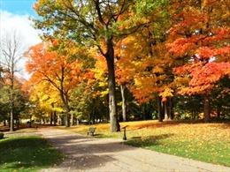 Canada vào thu đẹp mê hồn với lá vàng, lá đỏ