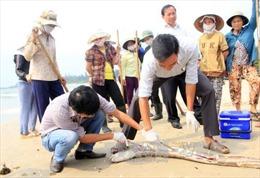 Cần sớm tìm ra nguyên nhân cá biển chết