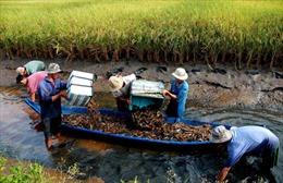 Nhiều giải pháp phát triển nuôi trồng thủy sản