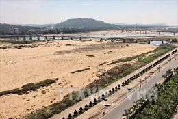 Đắp đập tạm trên sông Trà Khúc lấy nước cứu lúa