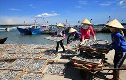 Cấp bách khôi phục hệ sinh thái biển miền Trung