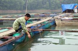 Mở rộng mô hình nuôi cá lồng trên sông